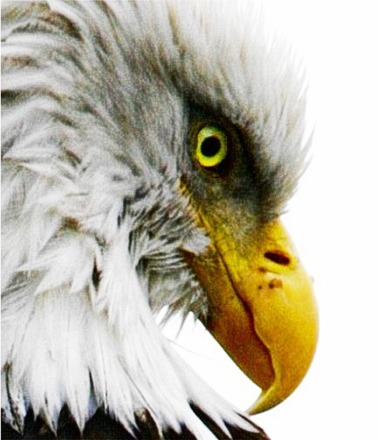 Bald Eagle Digital Art - Eagle Eye by Carrie OBrien Sibley