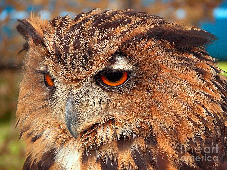 Eagle Owl Photograph - Eagle Owl by Graham Taylor