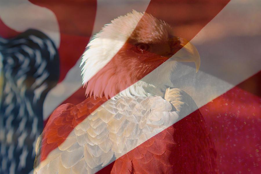 Eagle Photograph - Eagle by Rebecca Frank