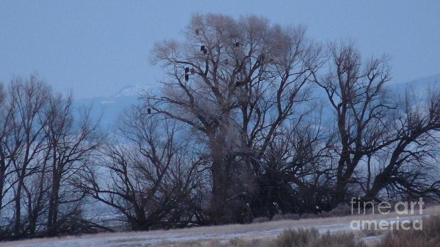 Idaho Falls Idaho Photograph - Eagle Tree by David Bearden