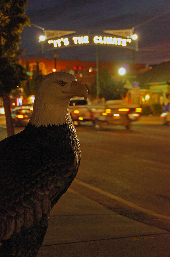 Eagle Photograph - Eagle Watching Grants Pass Night by Mick Anderson