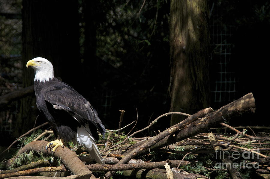 Eagle U0026 39 S Eyrie Photograph By Sean Griffin