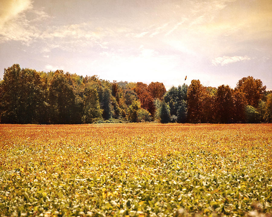 Autumn Photograph - Early Autumn Harvest Landscape by Jai Johnson