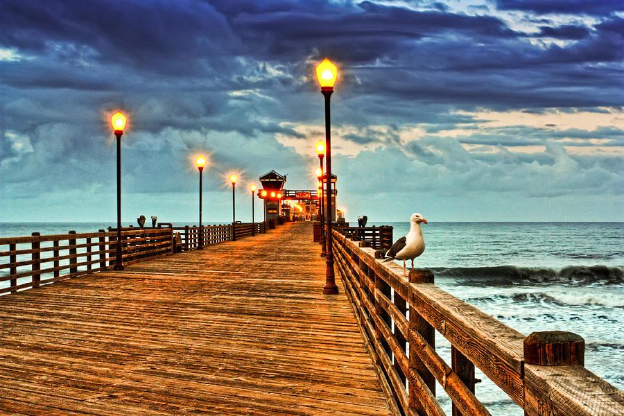California Photograph - Early Bird by Donna Pagakis
