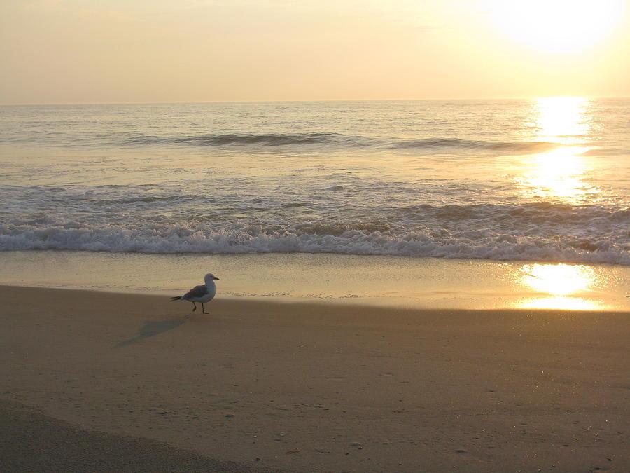 Bird Photograph - Early Bird by Jenna Mackay