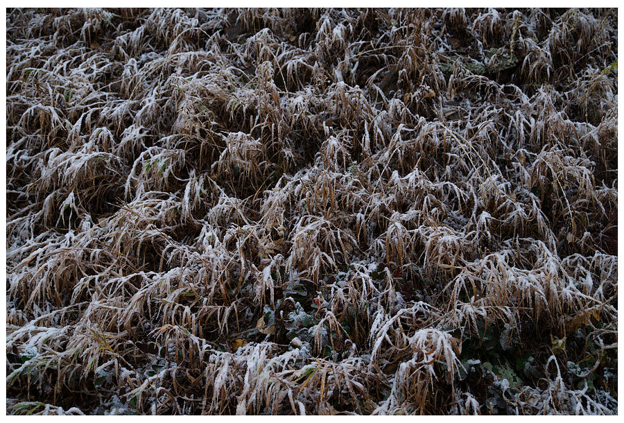 Frost Photograph - Early Frost by Mark Ivins
