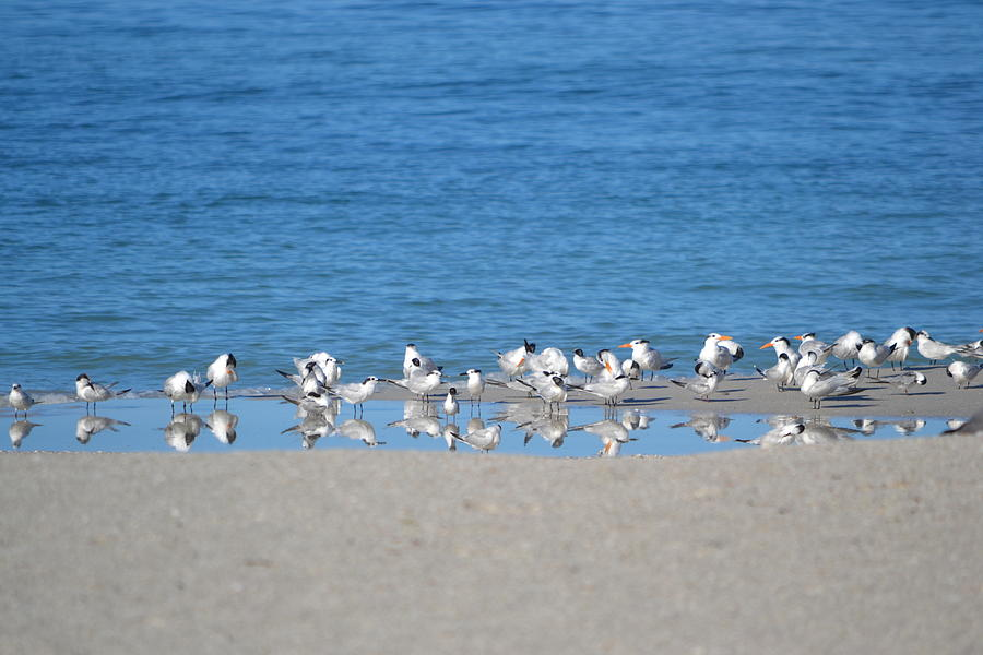 Seagulls Photograph - Early Morning Networking by Brenda Alcorn