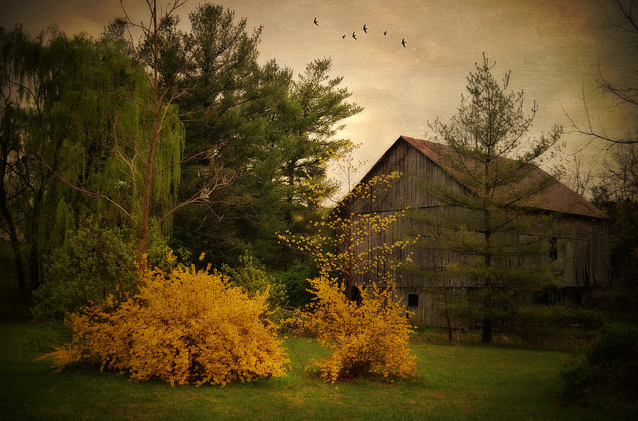 Barn Photograph - Early Spring by Kathy Jennings