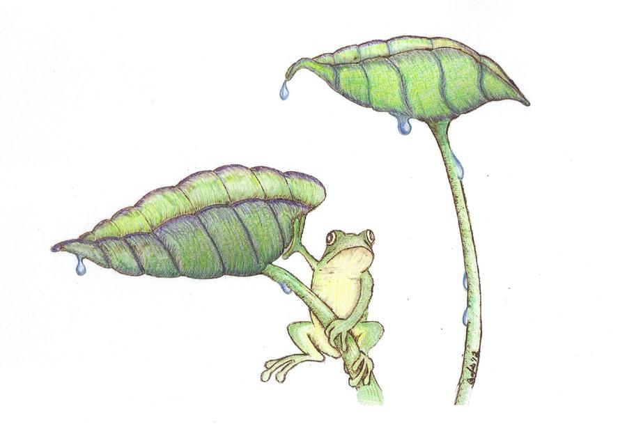 Frog Drawing - Early Start by Chad Bridges