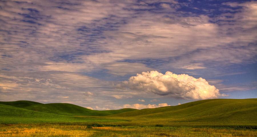 Bearded Wheat Photograph - Early Summer Wheat In The Palouse by David Patterson