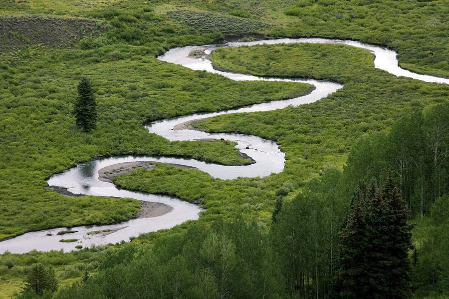 Meandering Photograph - East River In Grand Mesa, Usa. by Bob Gibbons