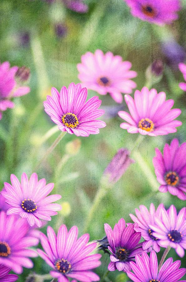 Floral Photograph - Easter Basket by Joel Olives