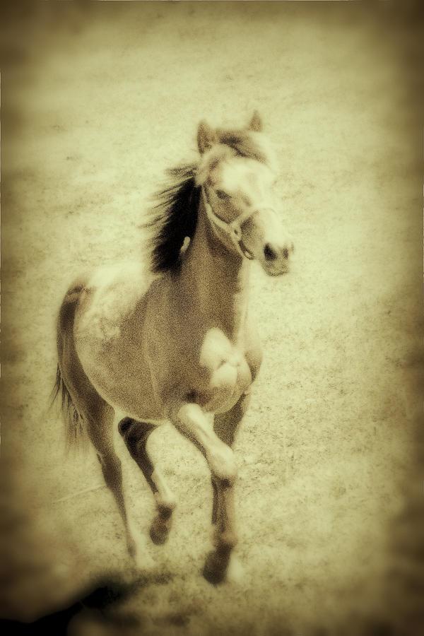 Horse Photograph - Easy Spirit by Karol Livote
