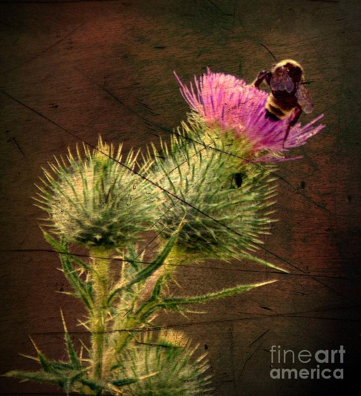Bee Thistle Nature Plant Digital Art - Easy Stepping by David Taylor