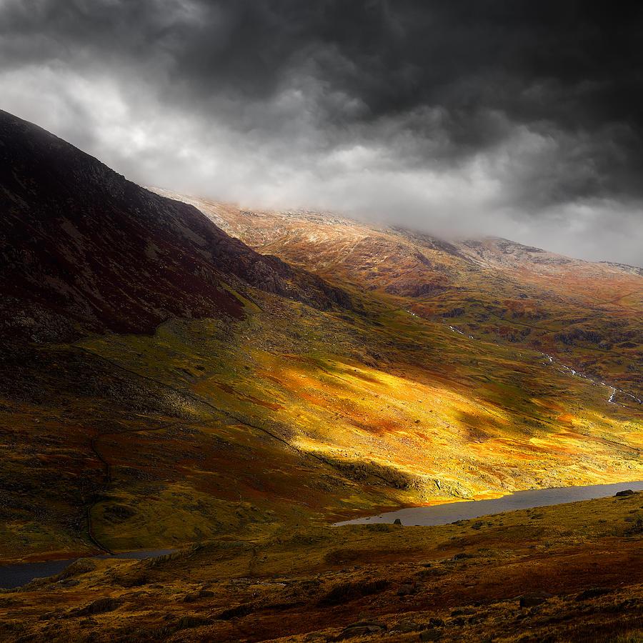 Eden Pyrography - Eden by Ian David Soar
