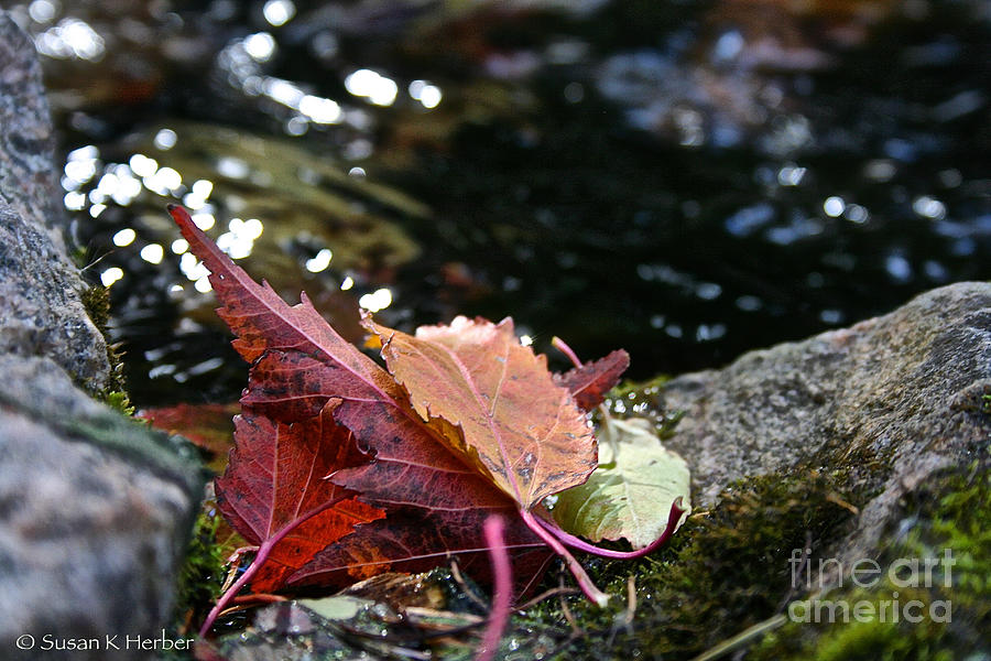 Outdoors Photograph - Edge by Susan Herber