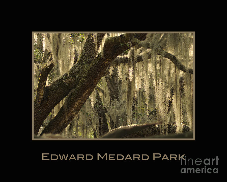 Medard Photograph - Edward Medard Park by Nancy Greenland