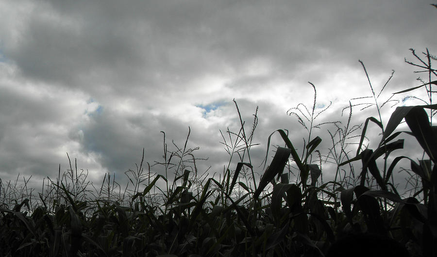 Clouds Photograph - Eerie Field by Karen Jordan