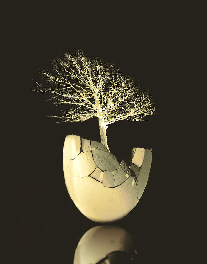 Egg Tree Digital Art By Ann Powell