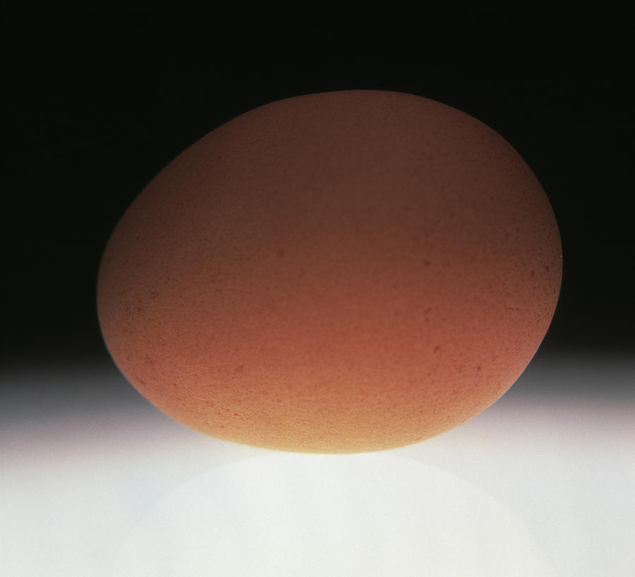 Egg Photograph - Egg by Victor De Schwanberg