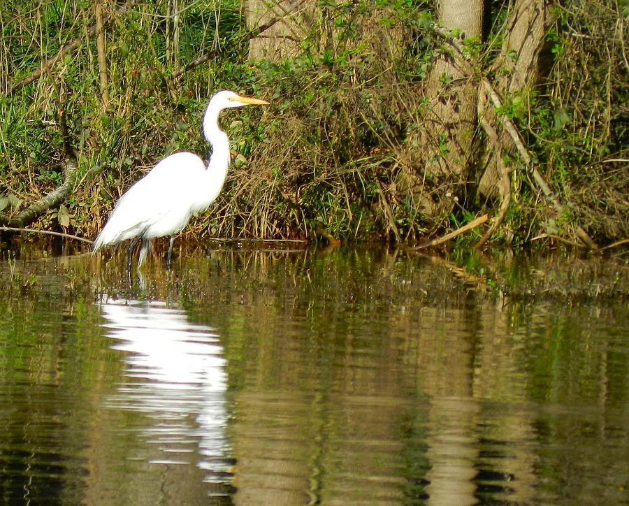 Egret Photograph by Don L Williams
