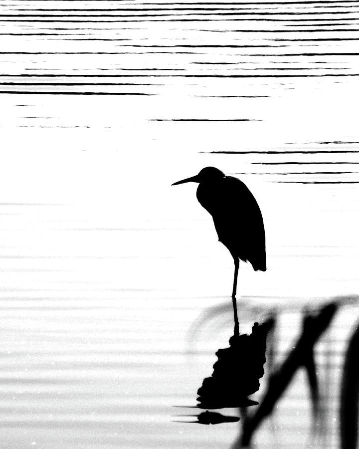 Egret Photograph