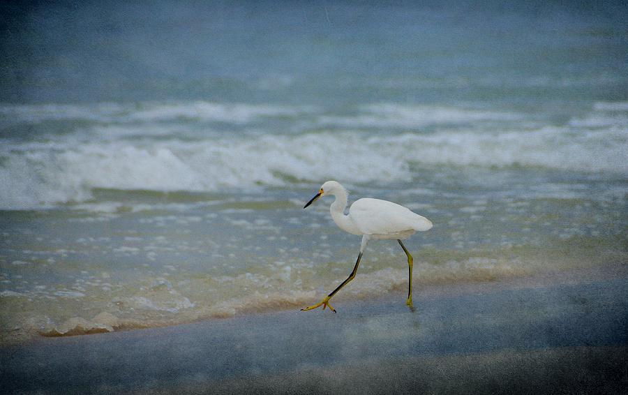 Bird Photograph - Egret by Sandy Keeton