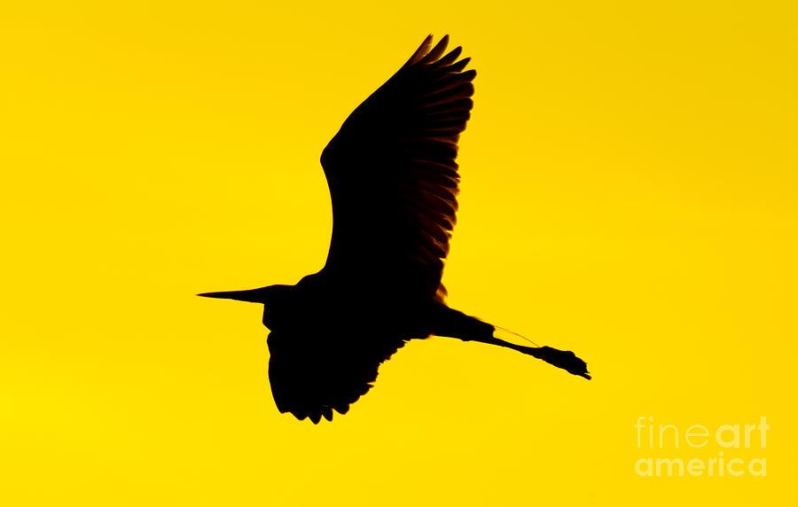 egret silhouette photograph by matthew trudeau