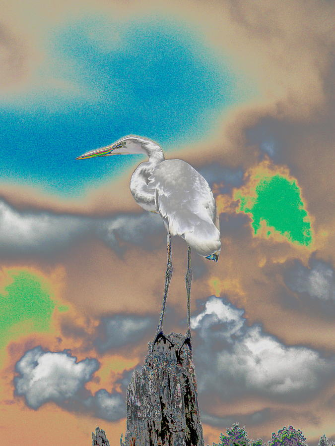 Heron Photograph - Egrit by Perry Conley