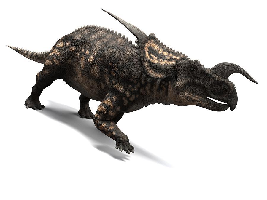 Artwork Photograph - Einiosaurus Dinosaur, Artwork by Sciepro