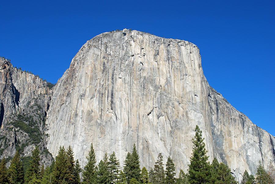 Tour Company Yosemite