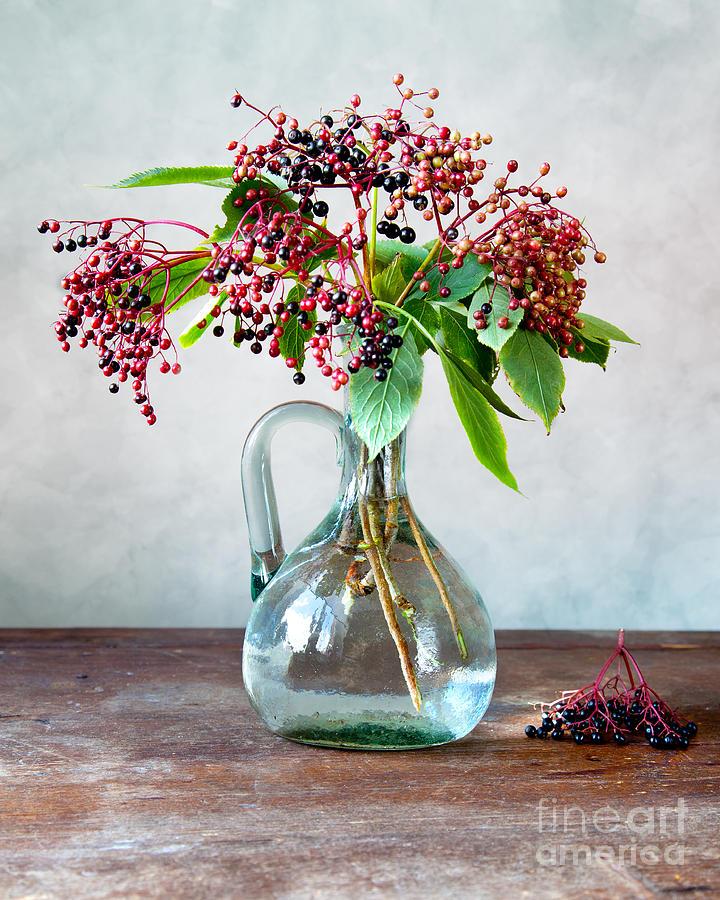Elderberries 06 Photograph