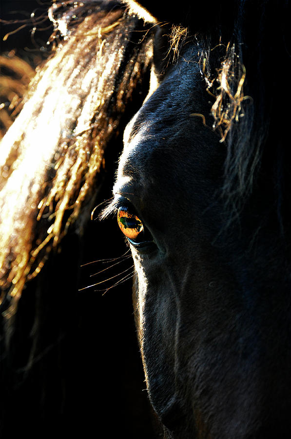 Horse Photograph - Electric Eye by Emily Stauring