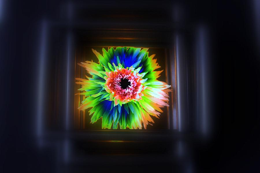 Abstract Photograph - Electric Flower by Marcia Lee Jones