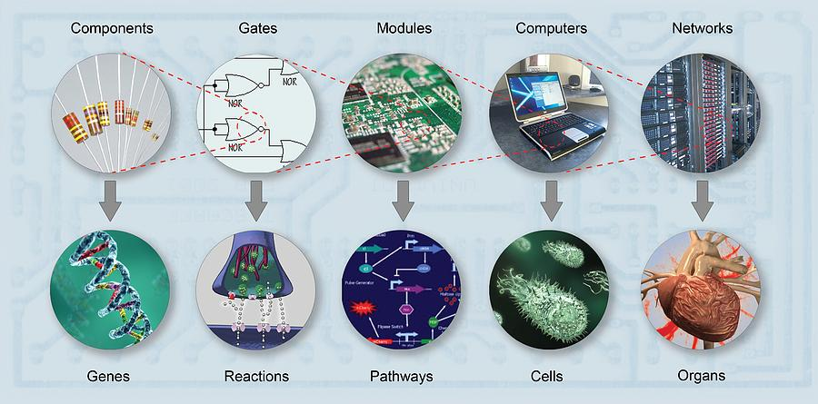 Dna Photograph - Electronic And Biologic Systems, Artwork by Equinox Graphics