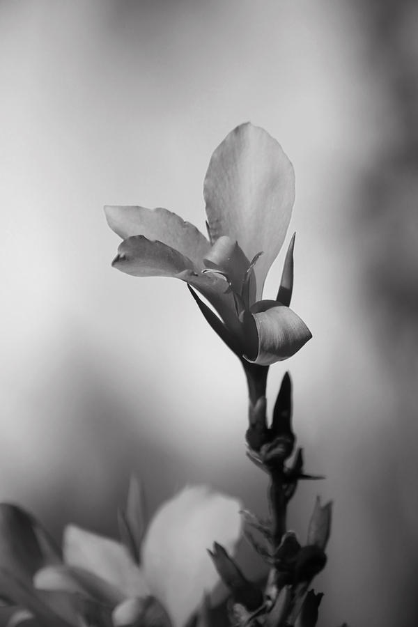 Flowers Photograph - Elegantly by Laurie Search