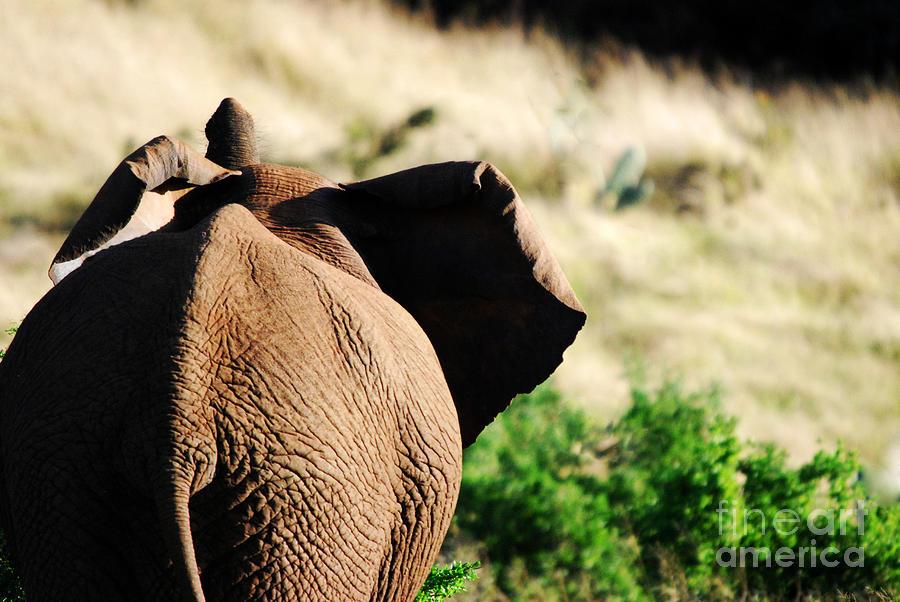 Africa Photograph - Elephant And His Butt by Alexandra Jordankova