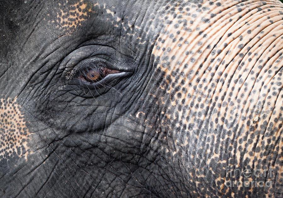 African Photograph - Elephant Close-up Portrait by Johan Larson