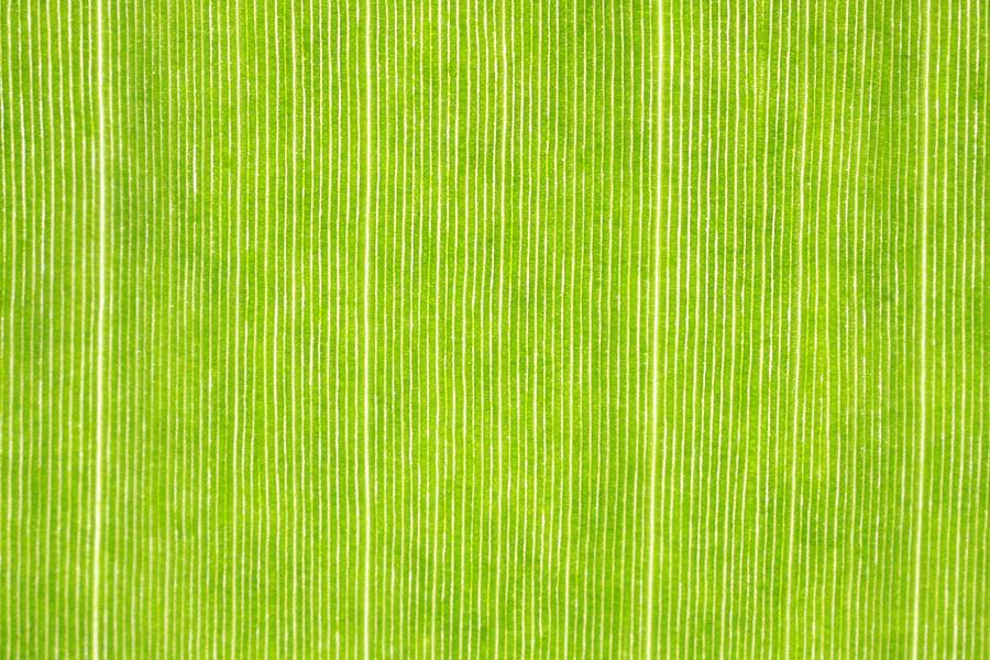 Plants Mixed Media - Elephant Ear Leaf by Will Czarnik