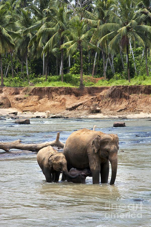 Animal Photograph - Elephant Family by Jane Rix