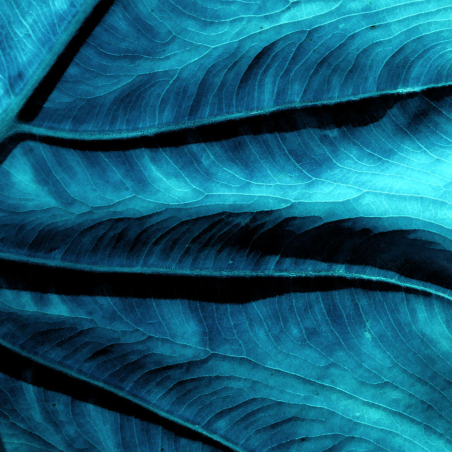 Digital Painting Photograph - Elephant Leaf Teal Abstract by Bonnie Bruno