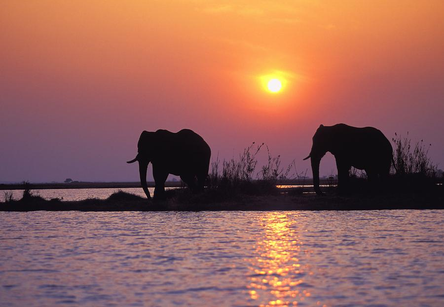 Outdoors Photograph - Elephant Silhouettes by John Pitcher