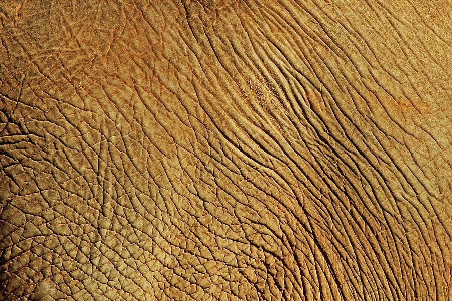 Horizontal Photograph - Elephant Skin by Daniela Duncan