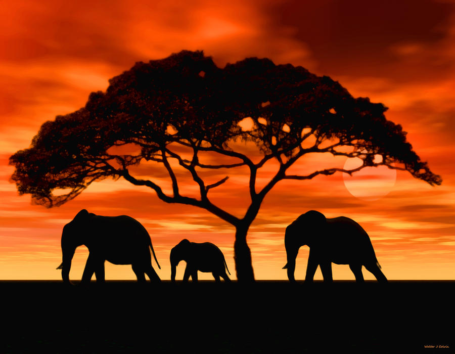 Elephant Digital Art - Elephant Sun Set by Walter Colvin