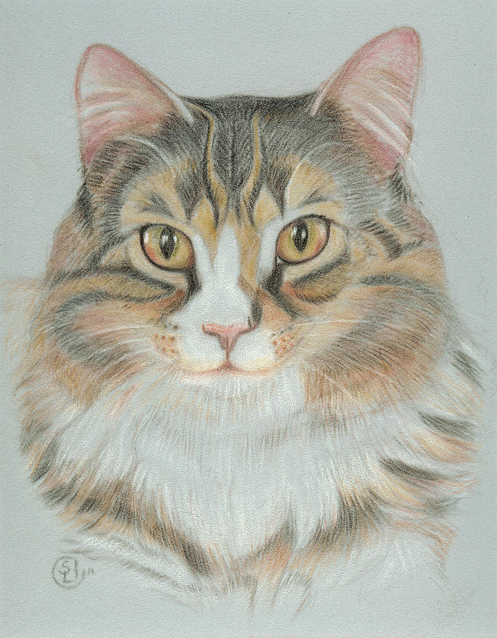 Cat Painting - Eli by Stephanie L Carr