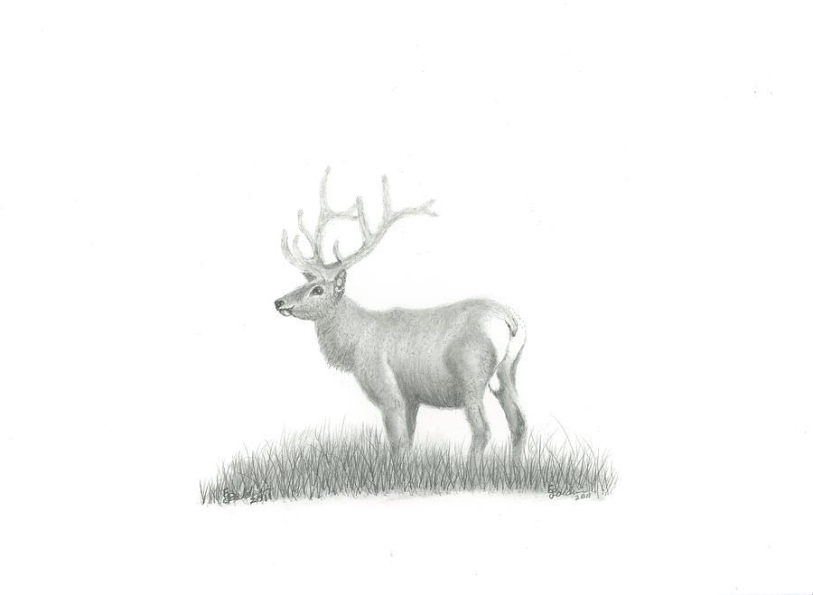 Elk Drawing by EJ John Baldwin