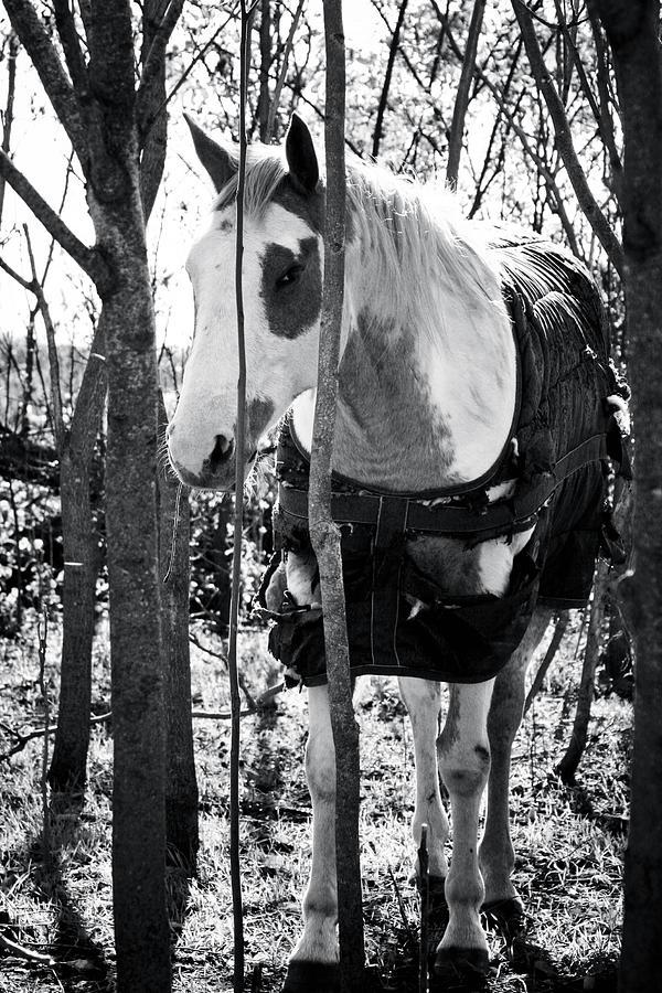 Horse Photograph - Elusive by Toni Hopper