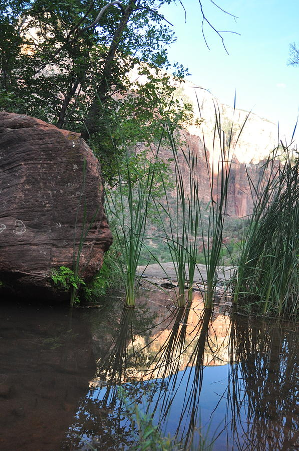 Landscape Photograph - Emerald Pool- Zion National Park by Michael Bartlett