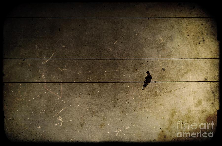 Bird Photograph - Emotional Distance by Andrew Paranavitana