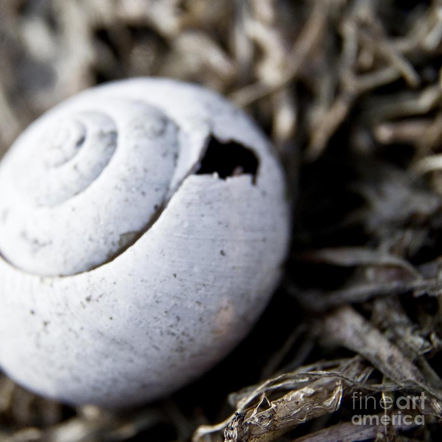 Snail Photograph - Empty Snail Shell by Agnieszka Kubica